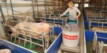 Akkutechnik im Stall: Fütterung von Ferkeln ohne Kabel