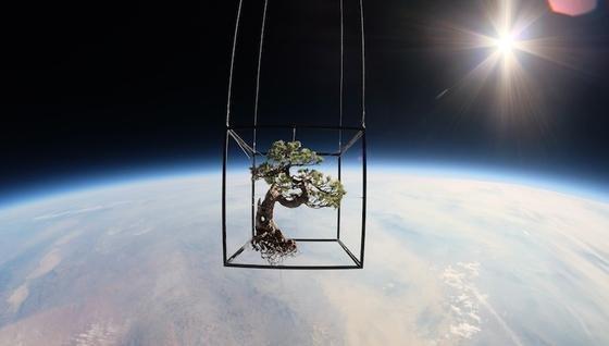 Bonsai im All: Der japanische KünstlerAzuma Makoto schickte zwei seiner Kunstobjekte zur Präsentation mit Ballons in 27 Kilometer Höhe.
