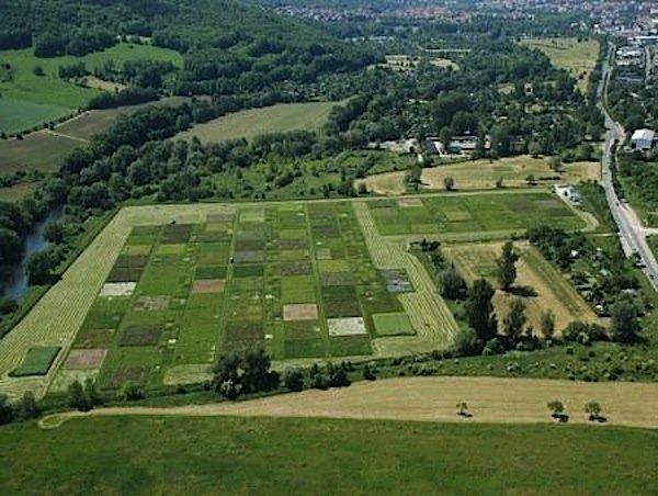 "Das ""Jena Experiment"": die Versuchsanlaage umfasst in der Saaleaue bei Jenaknapp 600 Parzellen mit Graslandarten."