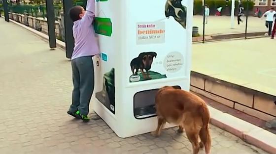 Herrenlose Hunde und Katzen pilgern angeblich schon in Scharen zu den Automaten. Und für die Passanten bedeutet die Flaschenabgabe kein Verlust. In der Türkei gibt es nämlich keinen Flaschenpfand.