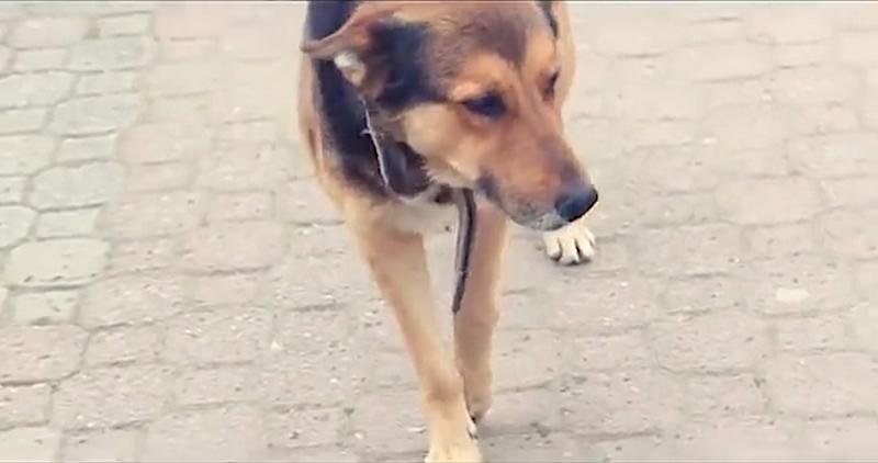 Sie gehören zum Straßenbild Istanbuls: Streunende, abgemagerte Hunde, ständig auf der Suche nach Nahrung.