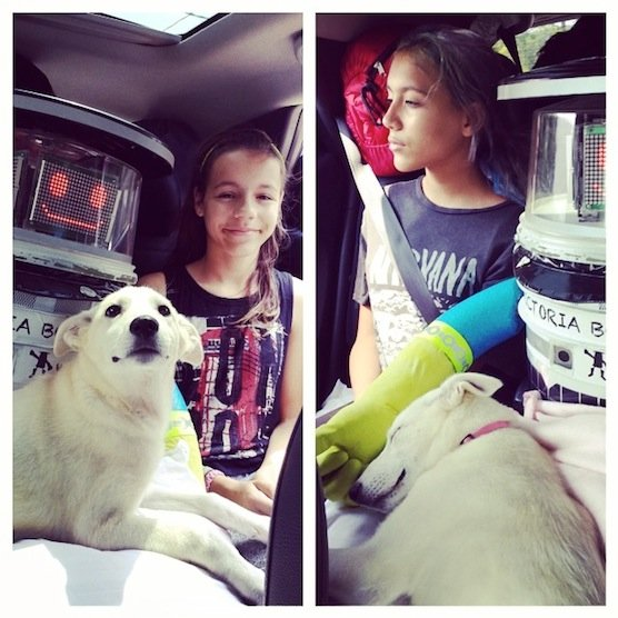 HitchBOT unterwegs im Auto: Der kleine Tramp-Roboter scheint selbst das Vertrauen der Tiere zu gewinnen.