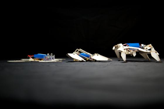 Er baut sich selbst auf und setzt sich auch automatisch in Bewegung: der neue Faltroboter, den Ingenieure der Harvard-Universität entwickelt haben.