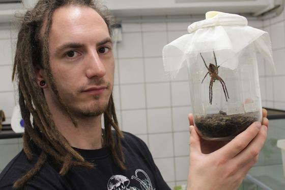 Ingo Grawe, Erstautor der Studie, mit einer Spinne, deren Haftscheiben die Forscher untersuchten.