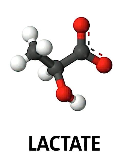 Molekülstruktur Laktat.