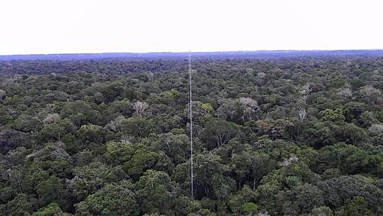 Der Amazonas-Regenwald ist eines der sensibelsten Ökosysteme der Erde: Ein 80 Meter hoher Forschungsturm steht bereits in direkter Nähe des geplanten Riesenturms.