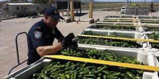 Mobiler Detektor riecht Geldnoten bei Grenzkontrollen