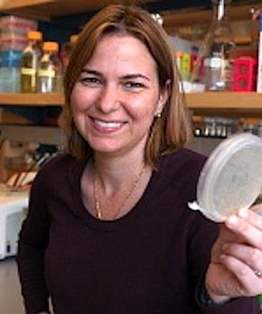 MIT-Forscherin Angelika M. Belcher.