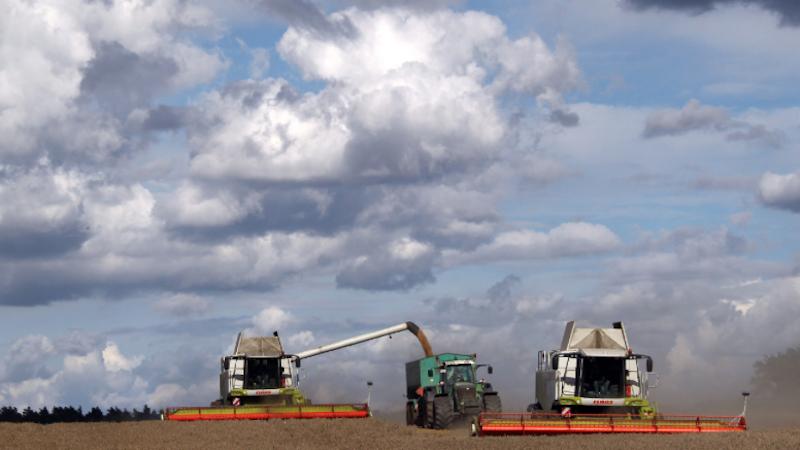 Mähdrescher fahren über einen Acker in Mecklenburg-Vorpommern und ernten Weizen.Weizen ist neben Reis, Mais und Hirse das wichtigste Grundnahrungsmittel überhaupt.