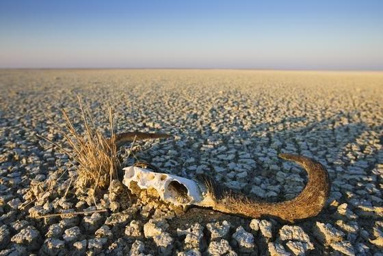 Trockenheit in Namibia: Der Wassermangel in vielen Teilen der Erde kann nach einer WWF-Studie auch deutsche Unternehmen treffen, etwa durch Lieferausfälle.