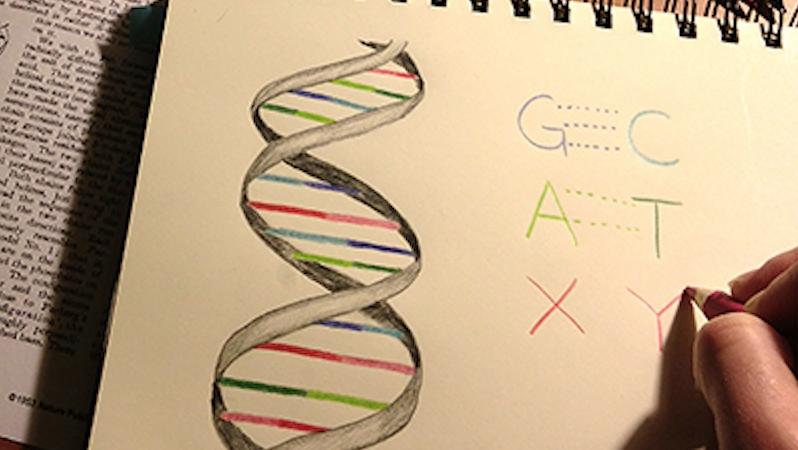 Erste künstliche Basen haben Forscher schon in den neunziger Jahren hergestellt. Die vor sechs Jahren erzeugten Buchstaben X und Y tragen die kryptischen Namend5SICS und dNaM.