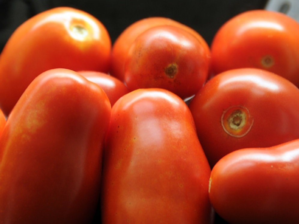Würzburger Forscher haben nun für zwei Tomatensorten einen Test entwickelt, der genau zwischen konventionell angebauten und Bio-Tomaten unterscheiden kann.