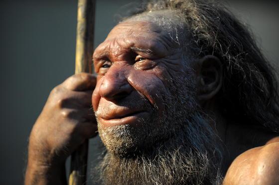 Nachbildung eines älteren Neandertalers im Neanderthal-Museum in Mettmann bei Düsseldorf: Jetzt wurden abstrakte Gravuren in einer Höhle in Gibraltar gefunden.