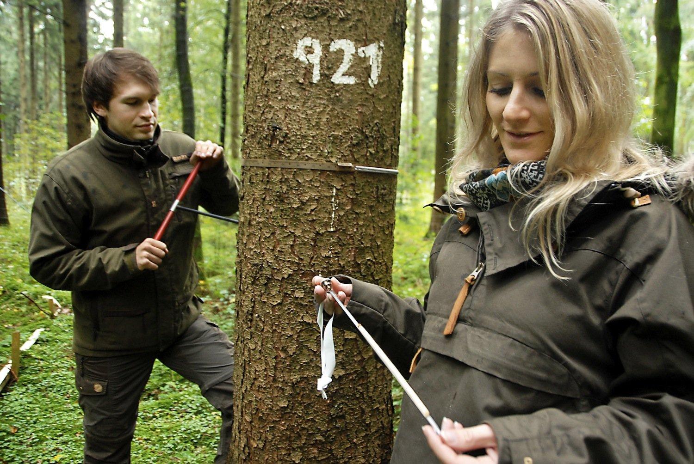 Doktoranden der Technischen Universität Münchennehmen eine Jahresring-Probe von einem Baum auf einer Versuchsfläche. Vor 144 Jahren begann die Waldstudie in Bayern.