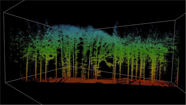 Mithilfe von Laserscans untersuchen die TUM-Wissenschaftler, wie sich Strukturen in Baumkronen verändern.