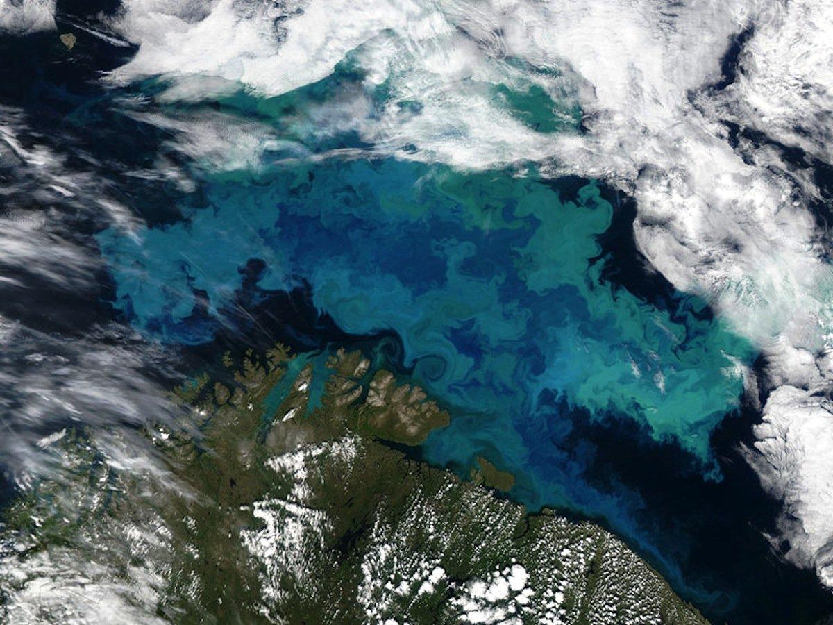 Kalkalgenblüte in der Barentssee:Die Kalkalge zählt zu den wichtigsten Produzenten von biologischen Calciumcarbonat und kann große Algenblüten bilden.