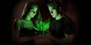 Durch Genmanipulation: Weltweit erste leuchtende Pflanze