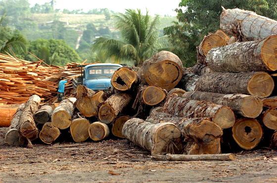 Sägewerk in Brasilien: Der brasilianische Küstentropenwald ist durch Abholzung bereits in245.173 Fragmente zersplittert. 90 Prozent sind kleiner als 100 Hektar.