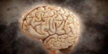 Supercomputer aus Jülich simuliert menschliches Gehirn