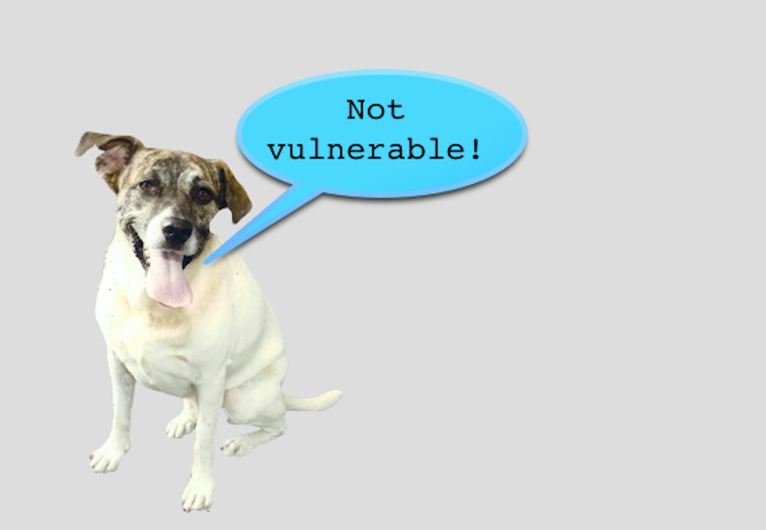 Poodle-Test im Internet: Wenn die Sicherheitssoftware TLS noch nicht geknackt wurde, lächelt der Hund, der kein Pudel ist.