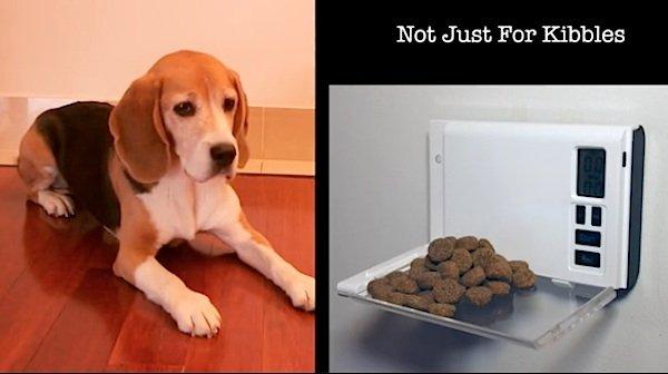 Für eine kleine Hundemahlzeit zwischendurch kann Droppi sorgen.