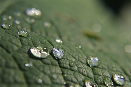 Wassertropfen perlen von einem Blatt der Lotuspflanze ab. Damit dieser Effekt auch bei Öl auftritt, setzt der Ingenieur aus Karlsruhe auf Hochleistungskunststoffe.