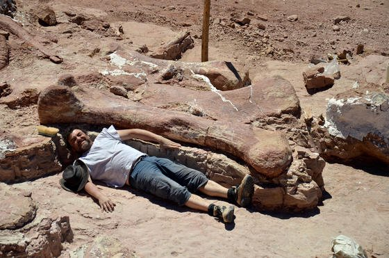 Ein Mitarbeiter des Museo Egidio Feruglio liegt neben einem Oberschenkelknochen dessüdwestlich von Trelew in der argentinischen Provinz Chubut gefundenen Dinosauriers. Das Tier könnte bis zu 40 Meter groß gewesen sein.