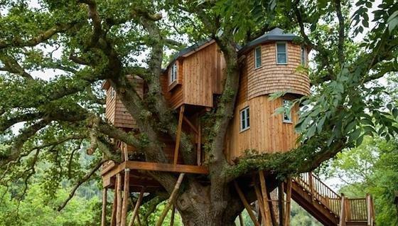 Ein Schlösschen aus Holz im Baum: das Fox and Hounds Country Hotel in Devon.