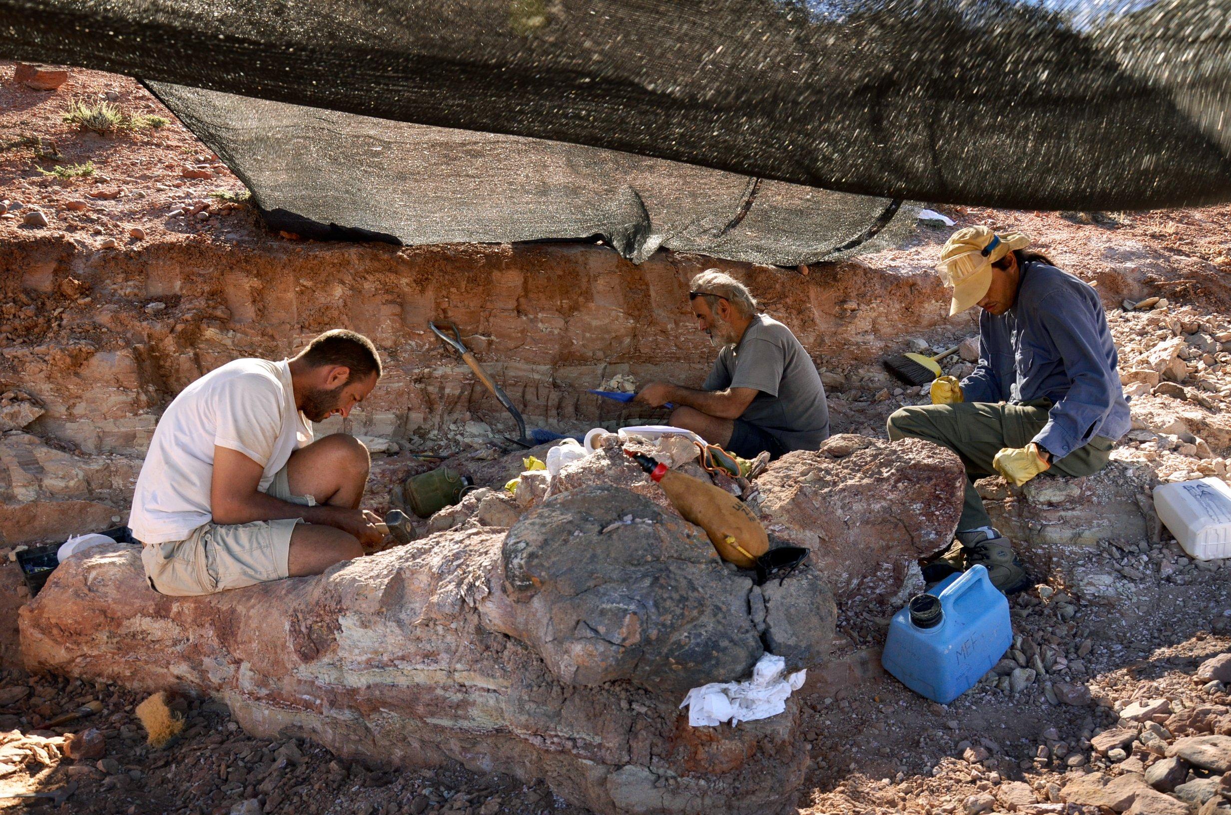 Mitarbeiter des Museo Egidio Feruglio bei der Ausgrabung des womöglich größten Dinosauriers der Welt.
