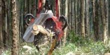 Kombinierte Fäll- und Entrindungsgeräte werden in deutschen Wäldern getestet