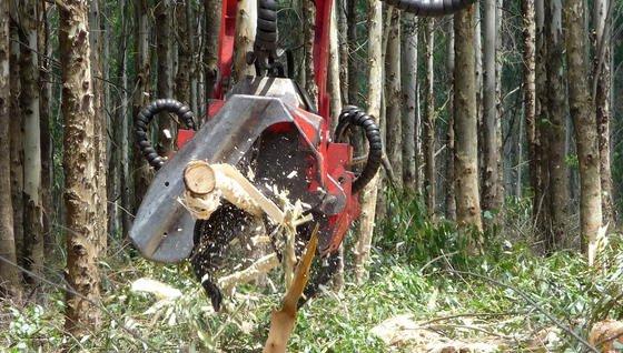 Ein entrindender Harvesterfällkopf im Einsatz.