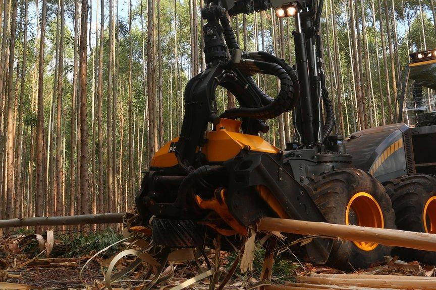 Das Harvesteraggregat der Firma Ponsse, das die Stämme nach der Fällung vor Ort nicht nur aufarbeitet sondern gleich entrindet, im Einsatz.