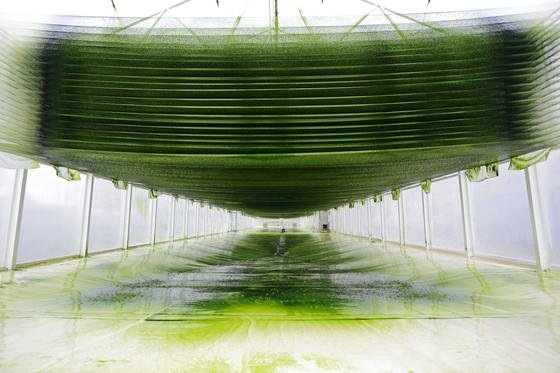 Im neu eröffneten Algen-Science-Center werden drei Produktionssysteme miteinander verglichen.
