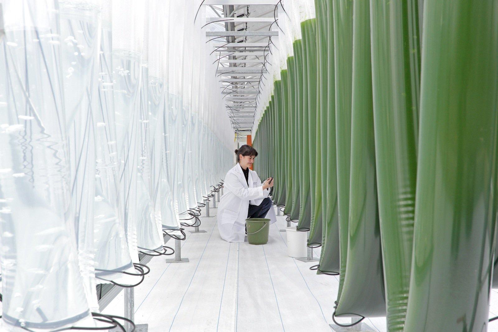 Blick in das Algen-Science-Center am Institut für Bio- und Geowissenschaften.