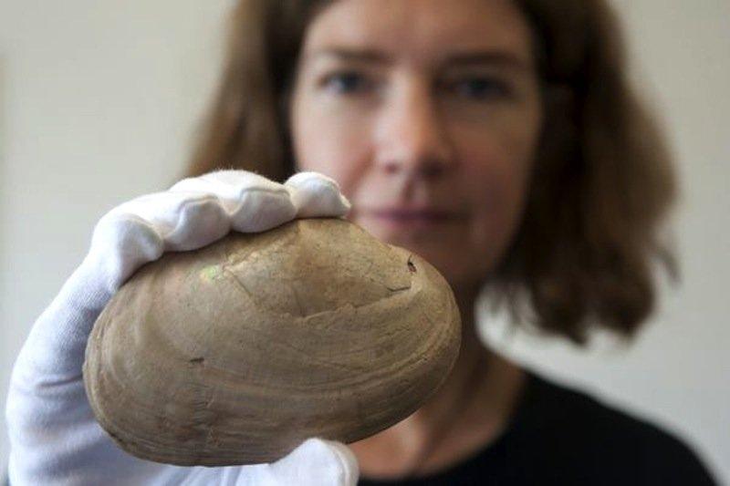 Archeologin José Joordens von der niederländischen Universität Leiden mit gravierter Muschel.