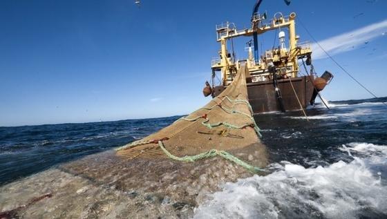Greenpeace fordert seit Jahren ein Sofortverbot der Grundschleppnetzfischerei. Die Studie eines internationalen Forscherteams bestätigt: Die Fangmethode zerstört die Artenvielfalt auf dem Meeresboden. Verantwortlich dafür sind vor allem die schweren Scherbretter der Netze.