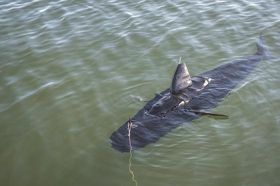 Silent Nemo sieht aus wie ein 1,5 Meter großer Thunfisch. Der Spionageroboter wiegt 45 Kilogramm und bewegt sich mit seiner mechanischen Schwanzflosse vorwärts.