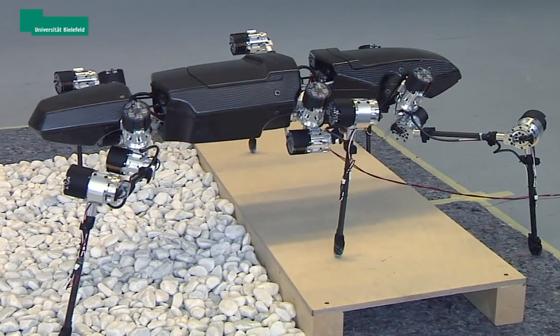 Die Roboter-Heuschrecke Hector bewegt sich eigenständig durch unebenes Gelände:Stößt eines der Beine an einen Hindernis, ermittelt das elektronische Gehirn die optimale Aktion, um es zu umgehen.