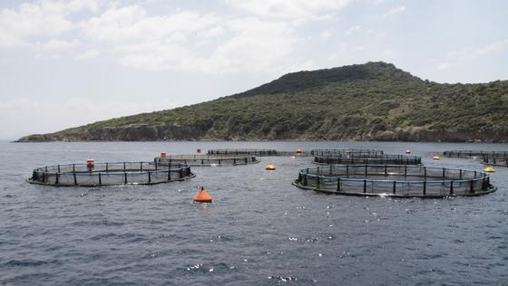 """Aquakultur im Mittelmeer:Im Rahmen des Forschungsprojektes """"EnviGuard"""" soll ein neues hochpräzises Messinstrument entwickelt werden. Für Aquakulturen gefährliche Chemikalien, Viren, Bakterien und Mikroalgen können damit präziser und einfacher entdeckt werden."""