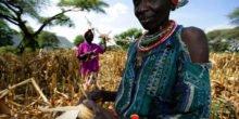 Klimawandel lässt Nahrung deutlich teurer werden