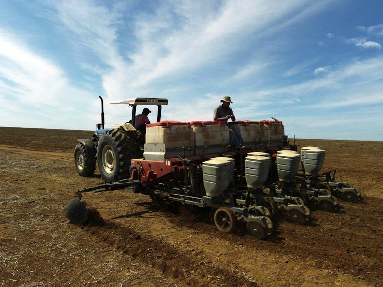 Sojaanbau in Brasilien:Der Klimawandel könnte den Ertrag der Landwirtschaft weltweit stark reduzieren. Das würde nach einer neuen Studie zu stärkeren Preissteigerungen führen als die Flächenkonkurrenz mit Pflanzen zur Herstellung von Biokraftstoffen.
