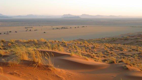 Namibia im südwestlichen Afrika hat Sand in Hülle und Fülle. Auch Akazien gibt es überreichlich.Aus Sand und Akazien sollen künftig feuerfeste Baustoffe produziert werden.Dafür soll zunächst ein Kleber entwickelt werden. Daran arbeiten einheimische und deutsche Forscher gemeinsam.