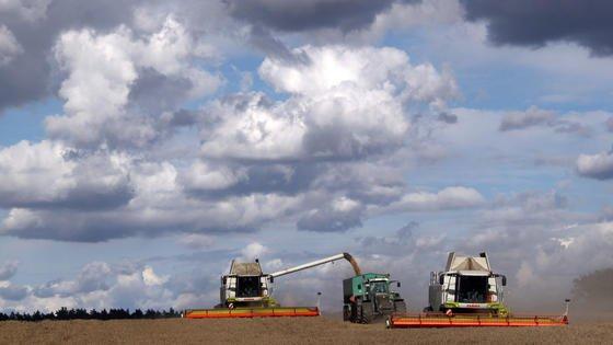 Mähdrescher fahren über einen Acker in Mecklenburg-Vorpommern und ernten Weizen. Weitaus häufiger wird Ackerland aber für Produktion von Tierfutter genutzt.