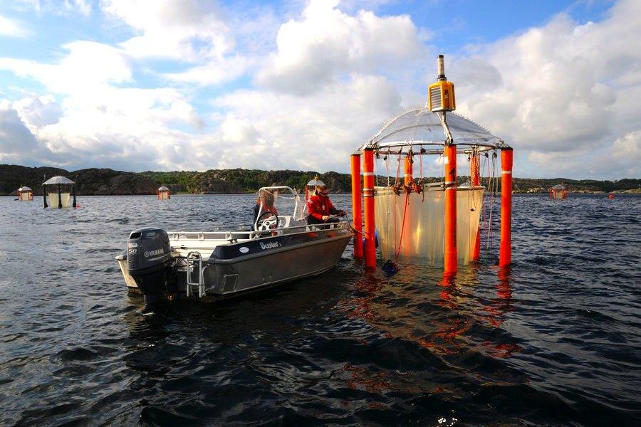 2013 beobachteten Forscher im Gullmarfjord an der schwedischen Westküste ein halbes Jahr lang, wie das Ökosystem auf Ozeanversauerung reagiert. Im Bild zu sehen ist ein Mesokosmos, der ins Meer abgelassen wird, um die Entwicklung in diesem Lebensraum unter verschiedenen Bedingungen zu beobachten.