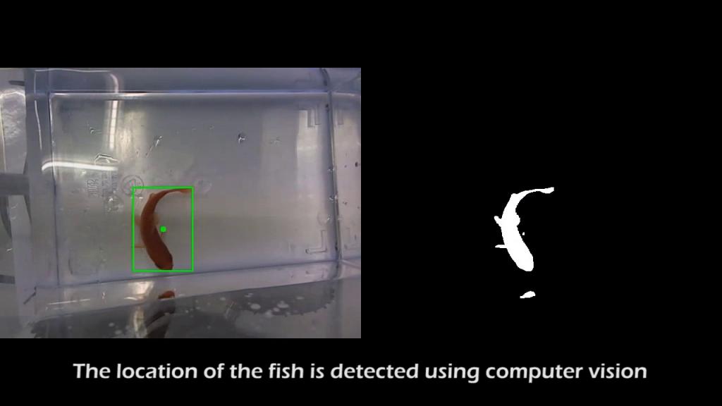 Die Bewegungen des Fisches bestimmen die Fahrroute. Sie werden von einer Webcam gefilmt. EineBilderkennungssoftware registriert daraufhin die Bewegungsrichtung des Fisches und gibt den Befehl an die Steuerungseinheit weiter, die das Aquarium auf das mutmaßlich gewünschte Ziel hin lenkt.