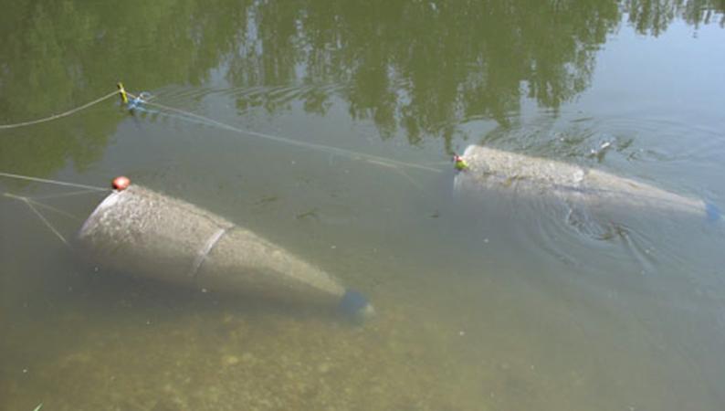 Die Forscher der Universität wollten sich eigentlich mit Driftnetzen einen Überblick über den Fischbestand verschaffen. Sie machten die erschreckende Entdeckung, dass mehr Plastik als Fischlarven in den Netzen hängenblieb. Hinzu kommt eine ungewisse Menge an Partikeln im Nanobereich.