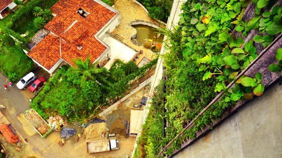 Der vertikale Garten entlang der Fassade eines Mehrfamilienhauses im kolumbianischen Medellin reicht 92 Meter in die Höhe. Von der Seite ihrer Balkone sehen die Hausbewohner auf den Grünstreifen.