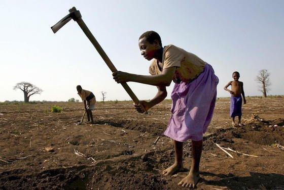Vertrocknetes Feld bei Blantyre in Malawi:Der Weltklimarat erwartet, dass die mittleren Ernteerträge um bis zu zwei Prozent pro Dekade sinken werden. Grund sind beispielsweise geringere Niederschlagsmengen in Teilen der Erde.