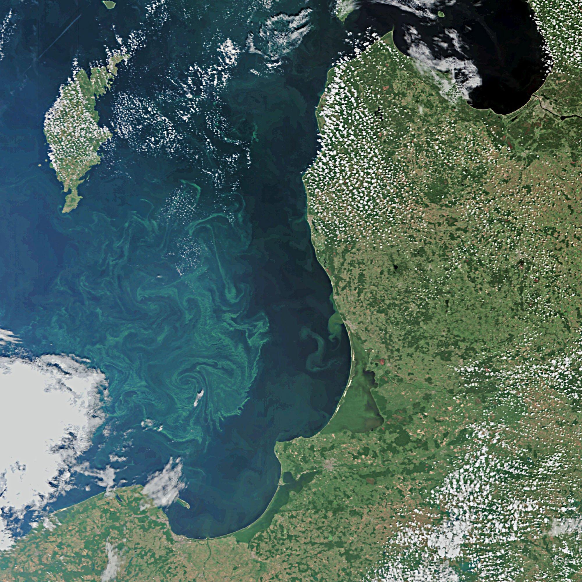 Algenblüte auf der Ostsee: Das Bild zeigt die Danziger Becken und die Ostsee vor Kaliningrad und Litauen sowie das südliche Ende Gotlands.