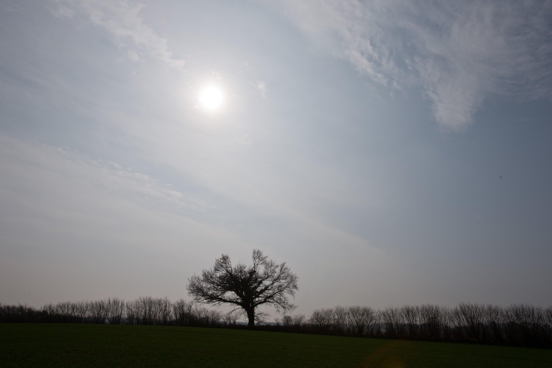 Ein kahler Baum steht am 2. April 2014 unter dunstiger Sonne auf einem Feld bei Eckernförde (Schleswig-Holstein). Sandkörner aus der Sahara verschleiern derzeit die Sonne über Norddeutschland.